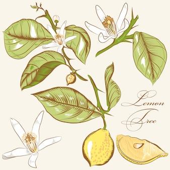 Set hand getrokken citroenen en bladeren