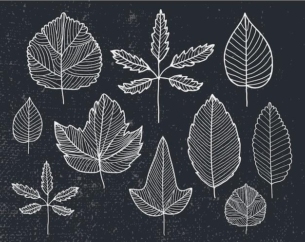 Set hand getrokken doodle lijn bladeren, herbarium, planten, herfst, lente