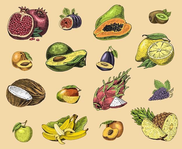 Set hand getrokken, gegraveerd vers fruit, vegetarisch eten, planten, vintage sinaasappel en appel, druif met kokos, dragonfruit, peer, perzik, pruim.