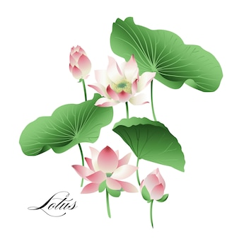 Set hand getrokken lotusbloemen en bladeren. waterverf.