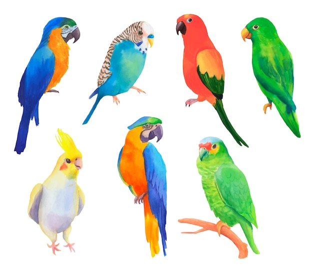 Set handgetekende aquarel verschillende papegaaien