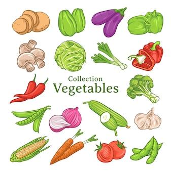 Set handgetekende groenten illustraties, groenten collectie, groente set