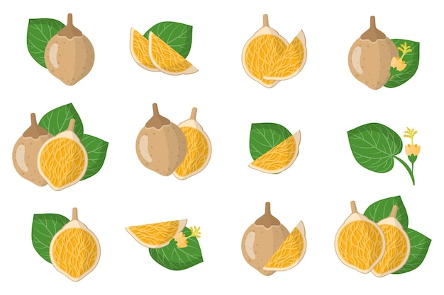 Set illustraties met matisia cordata exotisch fruit, bloemen en bladeren geïsoleerd