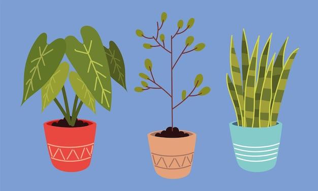 Set kamerplanten