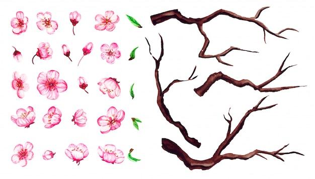 Set kersenbloesem bloemen, bladeren, takken. sakura bloemenillustratie op wit wordt geïsoleerd dat.