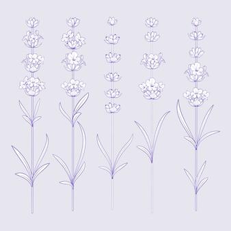 Set lavendel bloemen elementen.