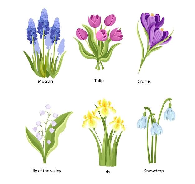 Set lentebloemen muscari, tulp, krokus en lelietje-van-dalen