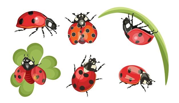 Set lieveheersbeestjes, grappige rode insecten met ogen en stippen