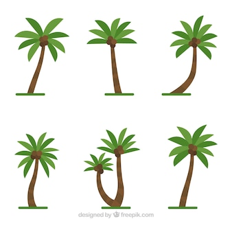 Set palmbomen met kokosnoten