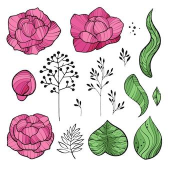 Set pioen bloem delen