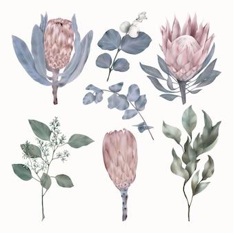 Set protea bloemen en groene en blauwe bladeren