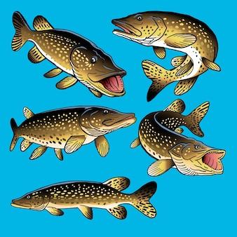 Set snoekvissen voor verzameling van gamefish-bundels