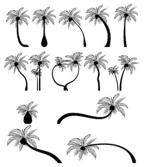 Set tropische palmbomen met bladeren volwassen en jonge planten zwarte silhouetten geïsoleerd