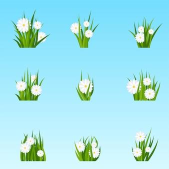 Set trossen groen gras met bloemen op een weide of gazon. zomerweideplanten, kamille bloeiwijze. rustiek landschap, landelijke boerderij.