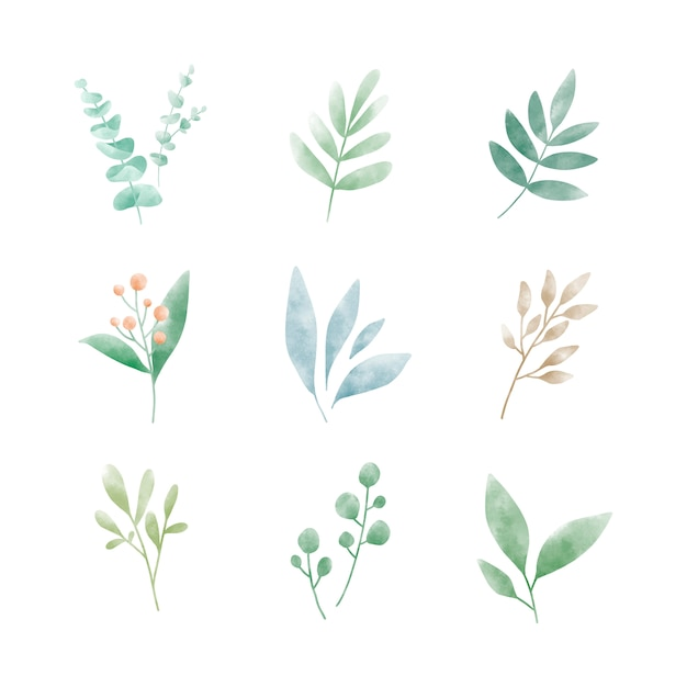 Set van aquarel bladeren vectoren