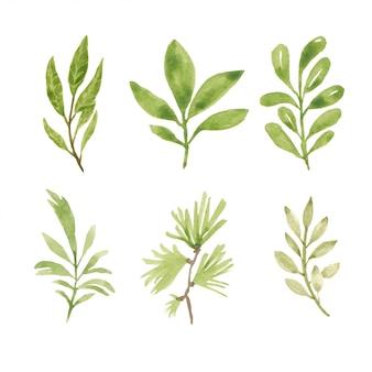 Set van aquarel handgeschilderde groen element
