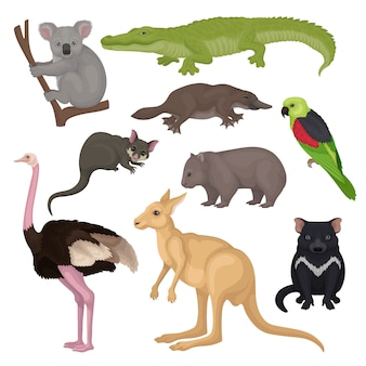 Set van australische dieren en vogels. wilde wezens. fauna thema. gedetailleerde elementen voor zoölogieboek of poster