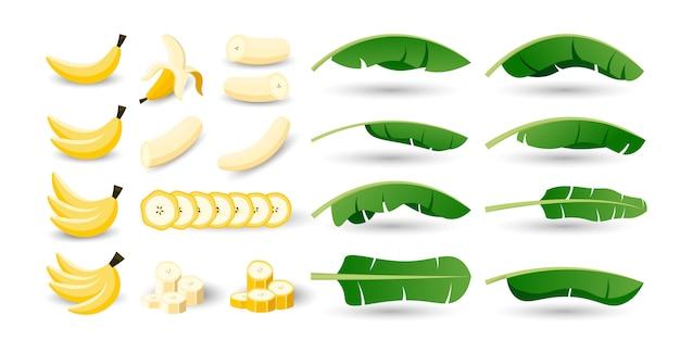 Set van banaan fruit vector. hele, in tweeën gesneden, in stukjes gesneden banaan.