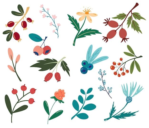 Set van bessen en bloemen. bosplanten, bessen, bloemen. veganistisch, boerderij, detox, natuurlijk voedselconcept. wilde bessen en bloemen. decoratieve designelementen. vectorillustratie in cartoon-stijl