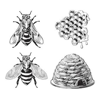 Set van bijen, wesp, honingraten, bijenkorf vintage tekening