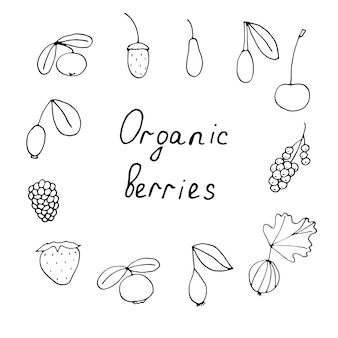 Set van biologische bessen, vector doodle illustratie