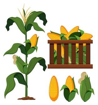 Set van biologische maïs
