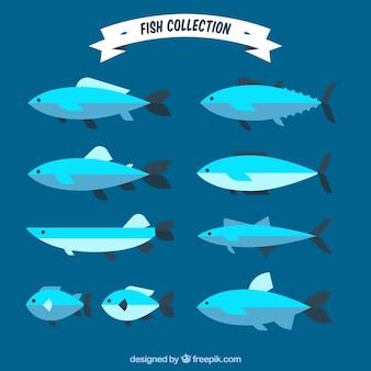 Set van blauwe vissen in vlakke stijl