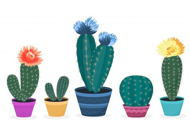 Set van bloeiende cactussen. cactus in een pot. ingemaakte huisplant