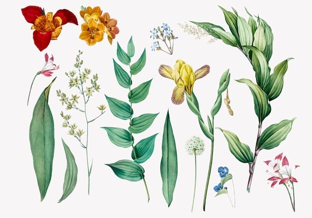 Set van bloemen en plantenillustraties