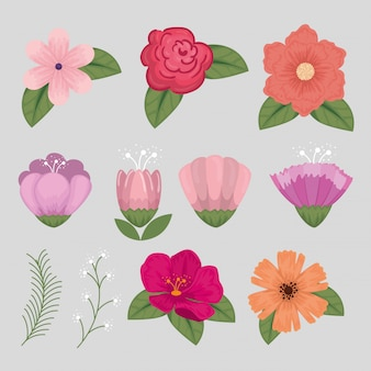 Set van bloemen met natuurlijke bloemblaadjes en bladeren