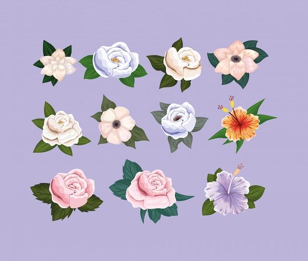 Set van bloemen schilderij ontwerp, natuurlijke bloemen natuur plant ornament tuindecoratie en plantkunde thema illustratie