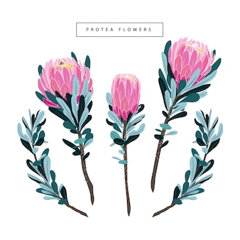 Set van bloemen vintage protea vector