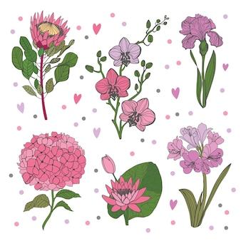 Set van bloementak. bloem roze hortenzia, orhid, iris, protea en groene bladeren.