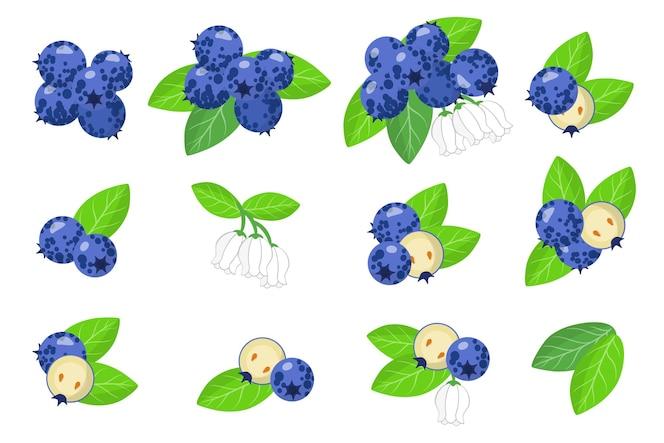 set van blueberry exotische vruchten geïsoleerd op wit