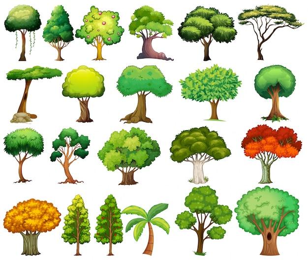 Set van bomen