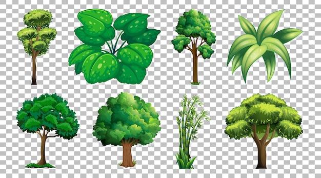 Set van boom op transparant