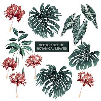Set van botanische planten