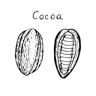 Set van cacaovruchten, geheel en half, vectorillustratie, schets