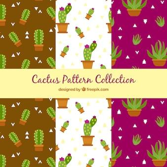 Set van cactuspatronen in plat ontwerp
