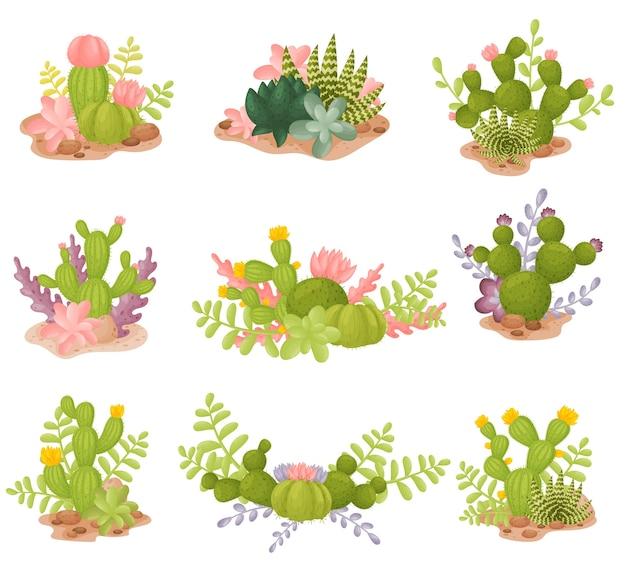 Set van cactussen in verschillende vormen