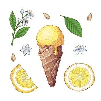 Set van citrus-ijs