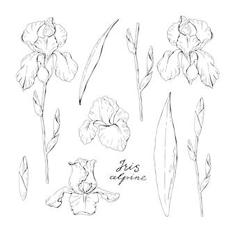 Set van clipart zwart-wit iris