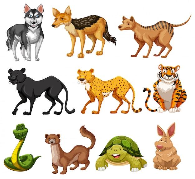Set van dieren karakter