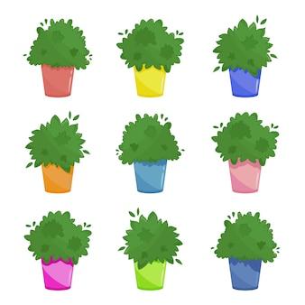Set van drie kamerplanten in verschillende kleurpotten. stedelijke keuken vensterbank tuin illustratie. weelderige groene keukenkruiden collectie in cartoon-stijl. geïsoleerd op wit