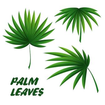 Set van drie palmbladeren. tropische planten.