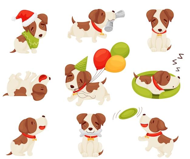 Set van een gevlekte puppy in verschillende poses