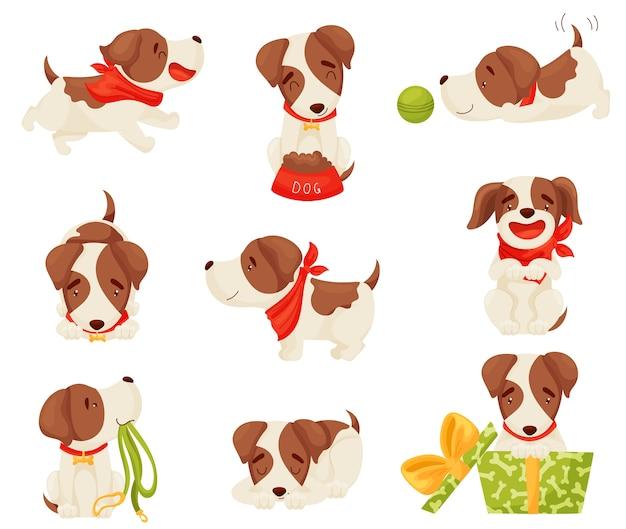 Set van een vrolijke gevlekte puppy in verschillende poses