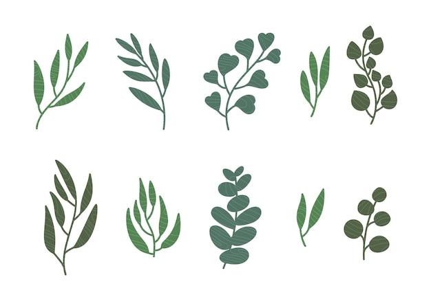 Set van eucalyptus bladeren, tak.