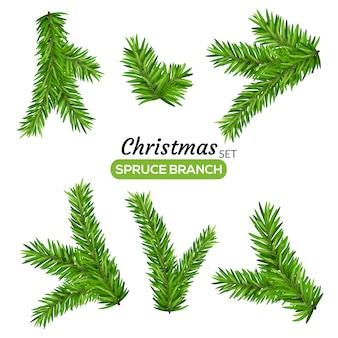 Set van fir takken. kerstboom of pijnboomtak groenblijvende illustratie. spar geïsoleerd vakantie decoratie.