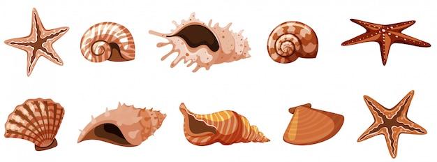 Set van geïsoleerde zeeschelpen in bruine kleur